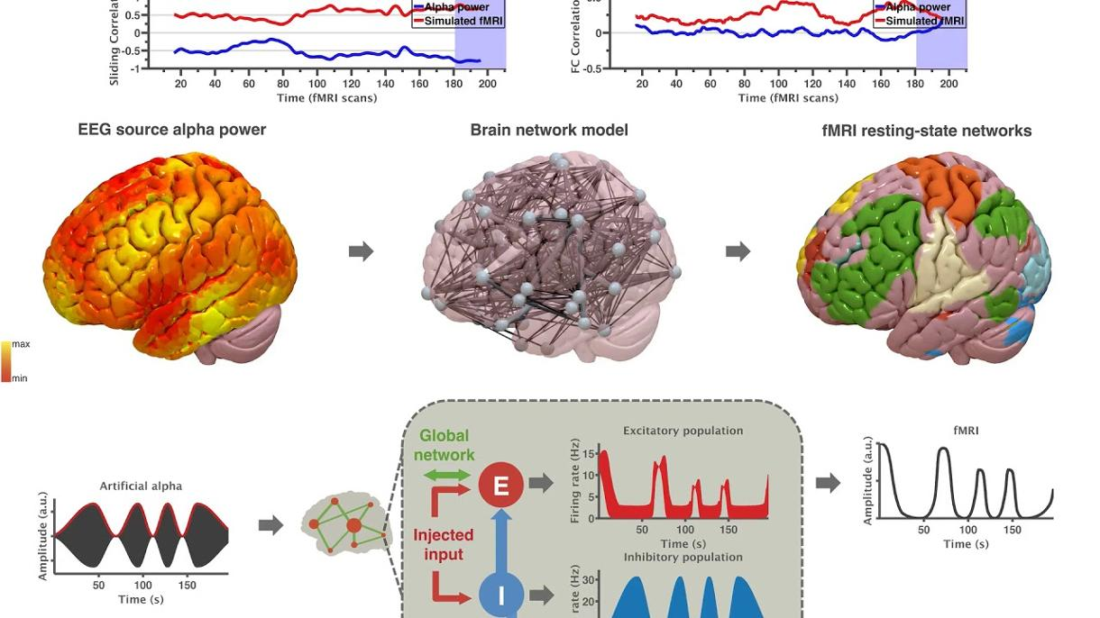 VIDEO: Inferring multi-scale neural mechanisms with brain network modelling